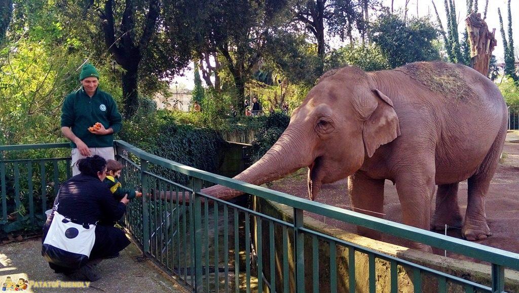 Gradina zoologica din Roma